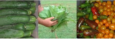 We are organic farmers who grow and supply organic food