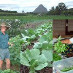Sandy Creek Organic Farm