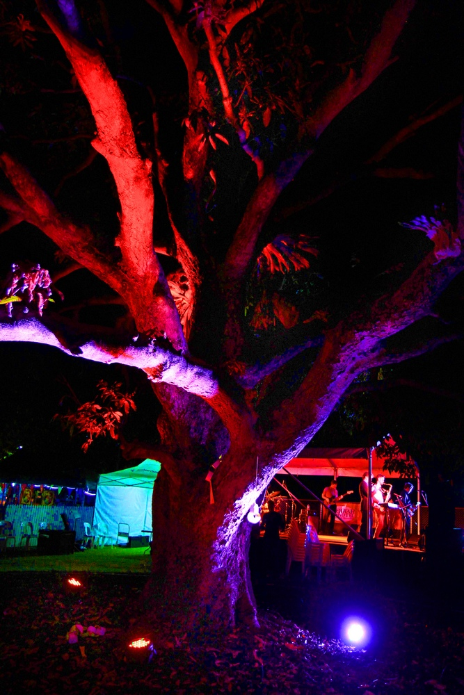 The Mango Tree at Night in Beerwah
