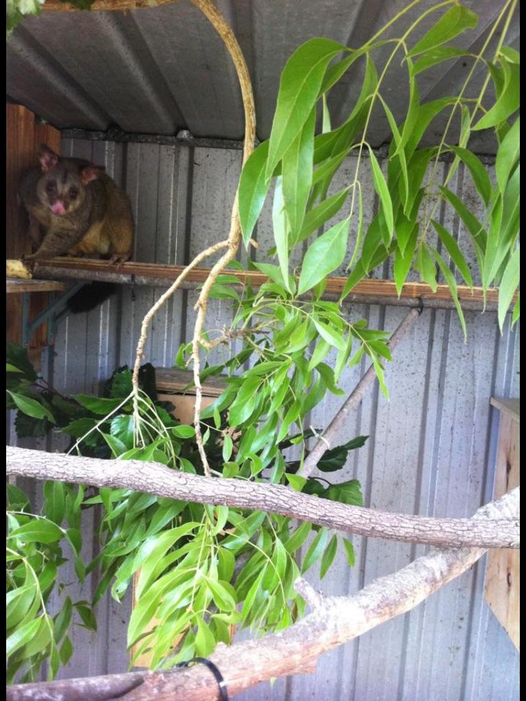 Mistys Possum Cage
