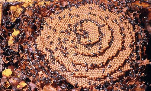 native bee comb